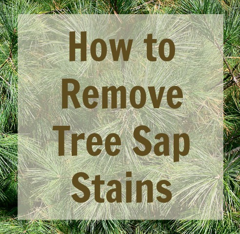 On The Spot How To Remove Tree Sap Stains Best Bib And